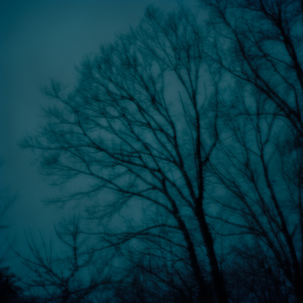 Oak Trees, New Jersey 2009. From the series, Encounters. Photo © Minny Lee.