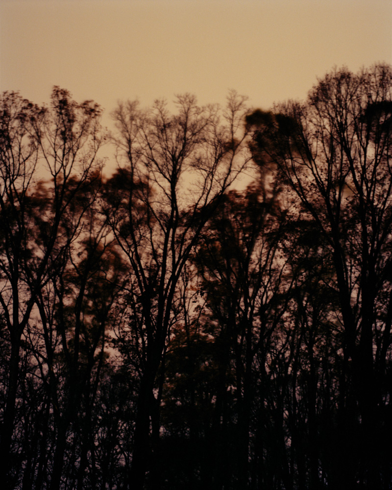 Midnight Trees, New Jersey, 2009. From the series, Encounters. Photo © Minny Lee.