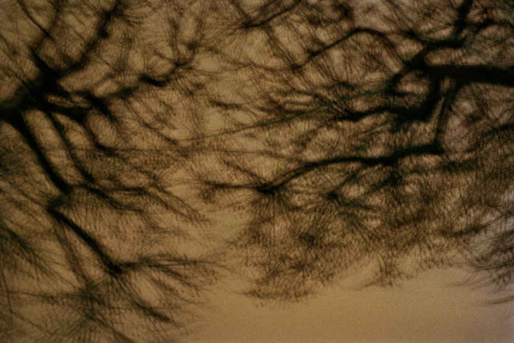 Poplars, Arles, France, 2010. From the series, Encounters. Photo © Minny Lee.