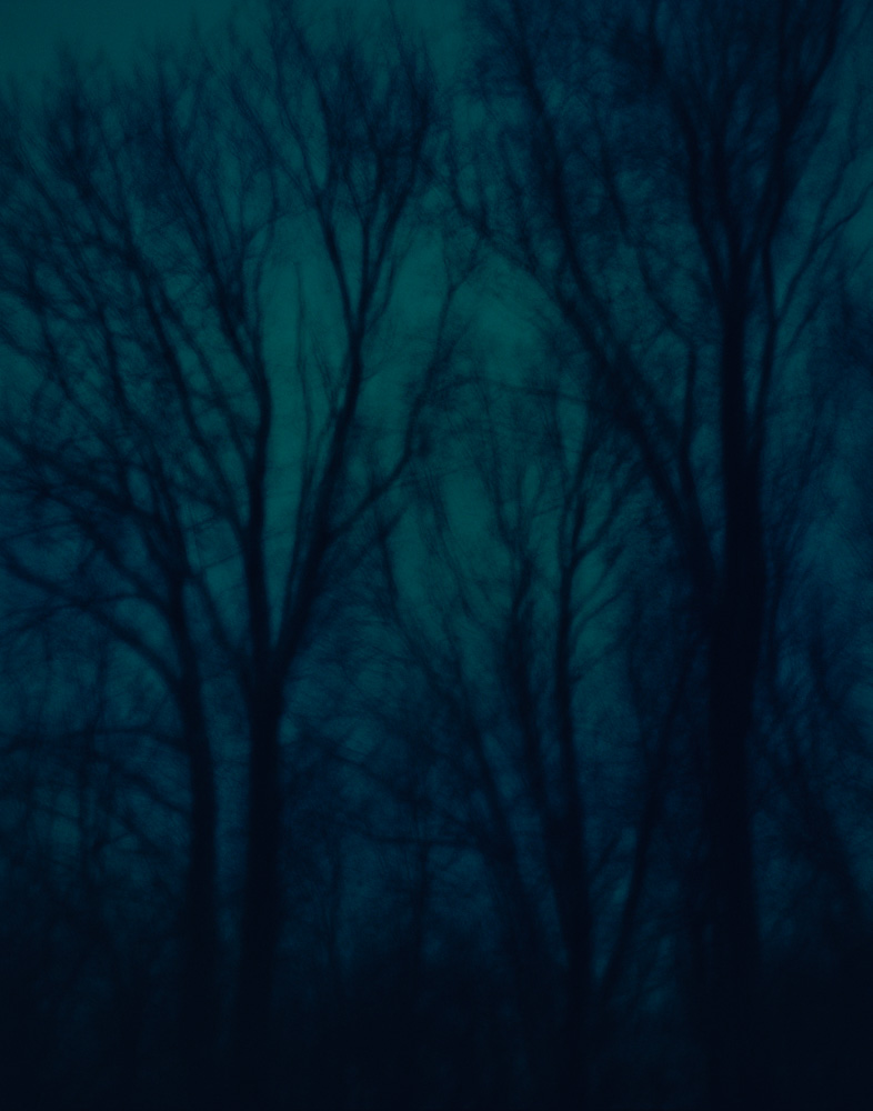 Ash Trees, New Jersey, 2008. From the series, Encounters.  Photo © Minny Lee.