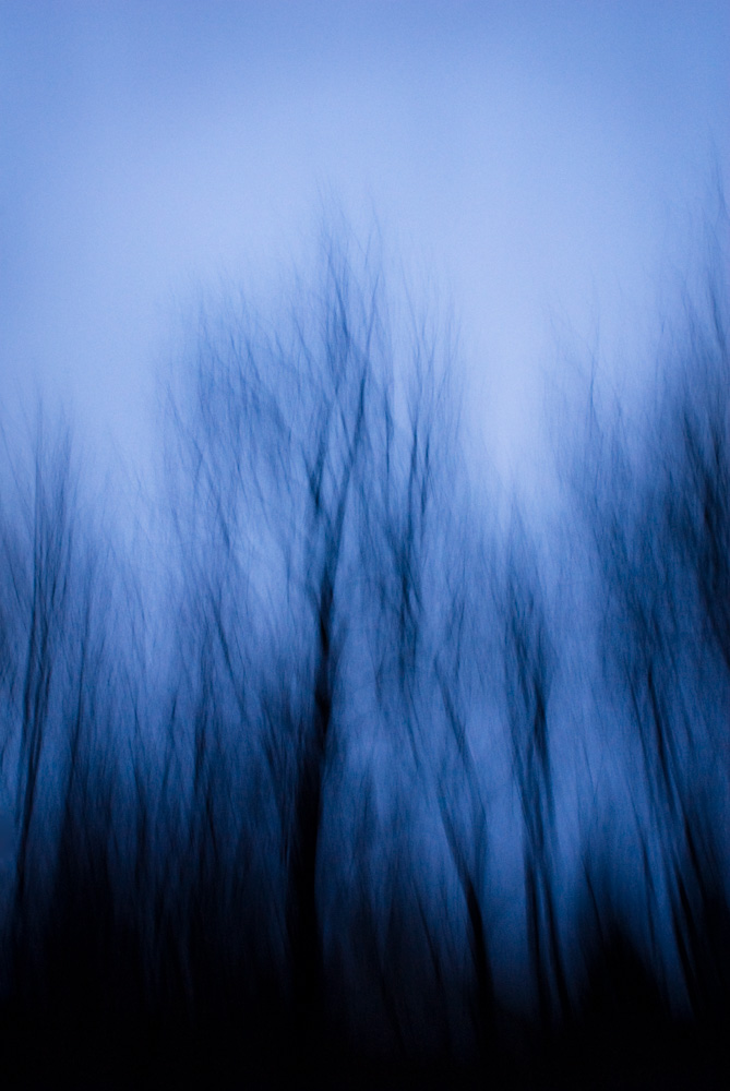 Trees After February Rain, New Jersey, 2008. From the series, Encounters. Photo © Minny Lee.