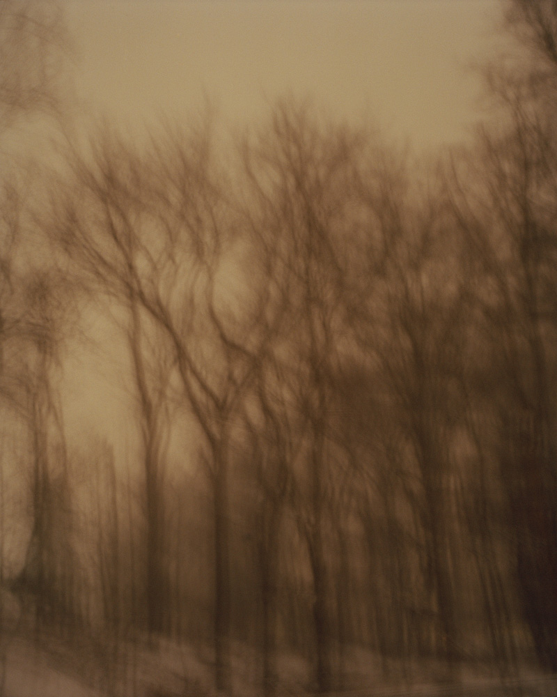 Black Walnut Trees, New Jersey, 2009. From the series, Encounters. Photo © Minny Lee.