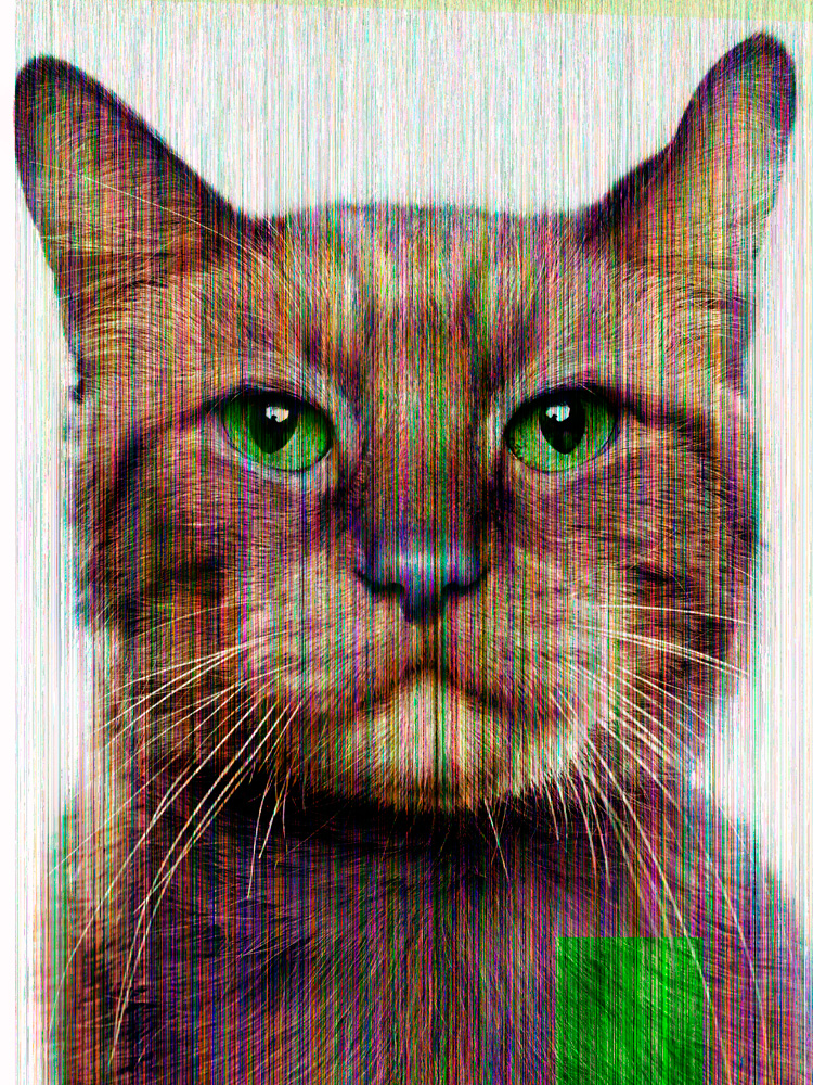 002_Jill_Greenberg_Glitch_Cat_Morris