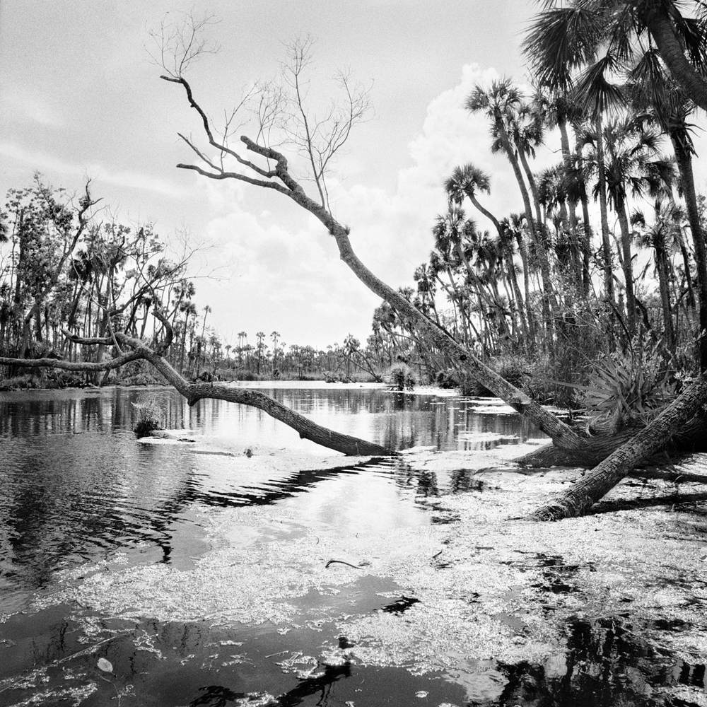 #12_Fallen Trees & Algae