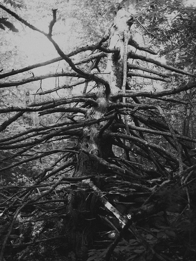 13_GNARLY_TREE∏AmaniWillett