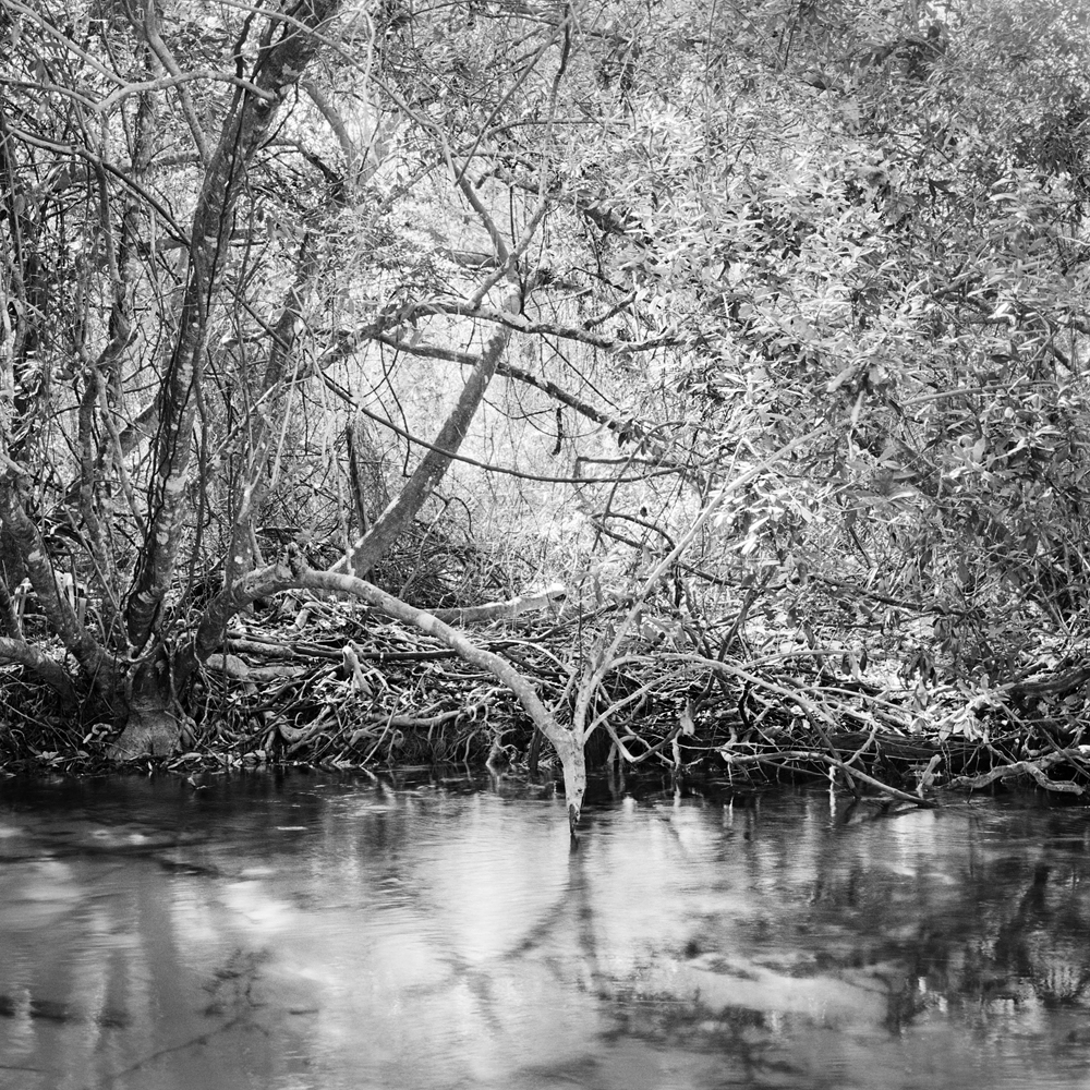 #2_Weeki Wachee River #2