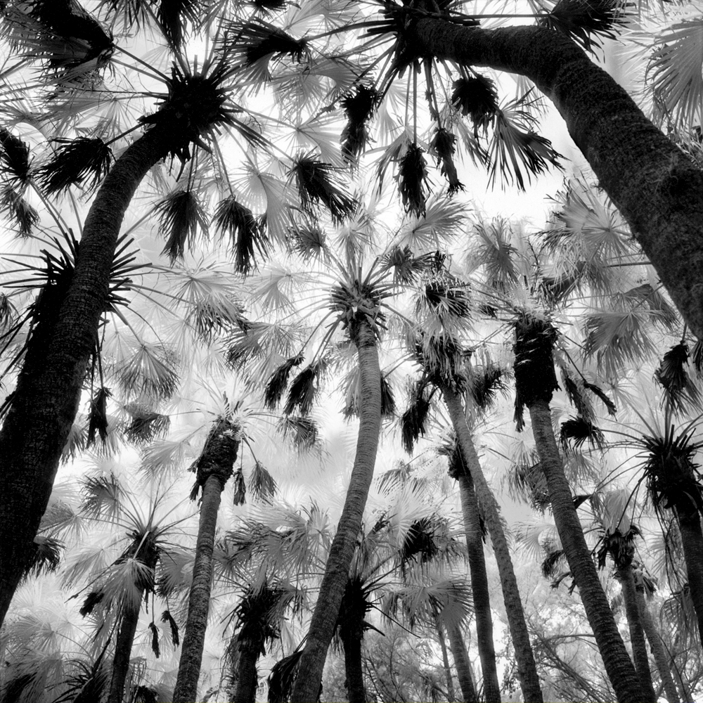 #4_Palm Hammock, Titusville