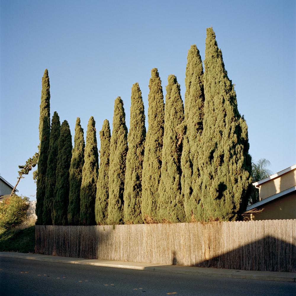 07boe_2016_cypress_trees