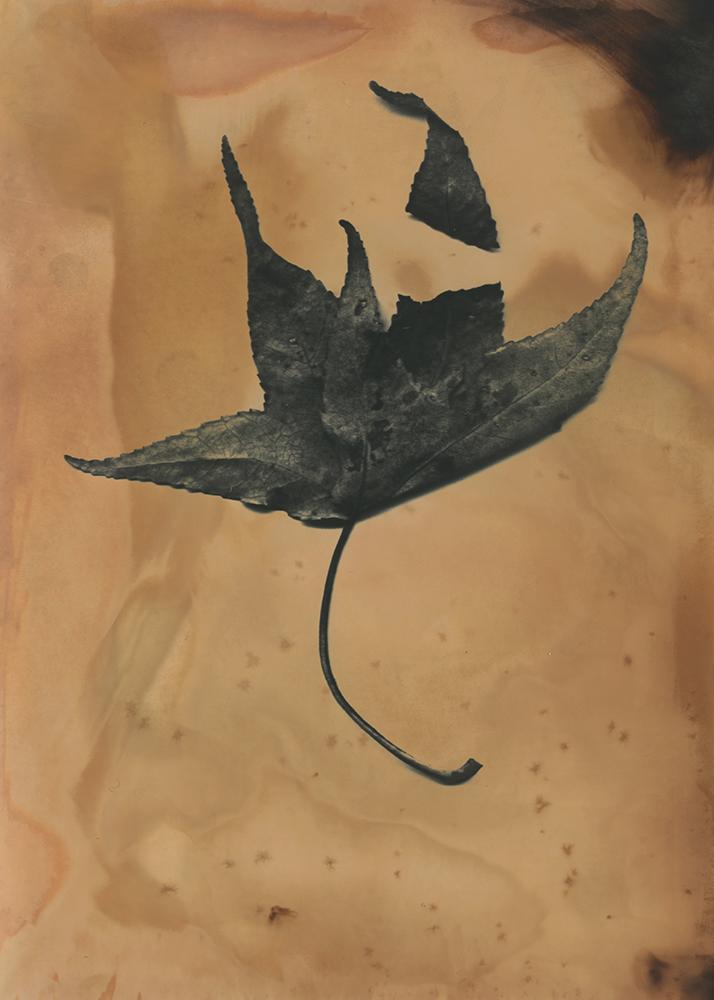 AFWells Leaf 12