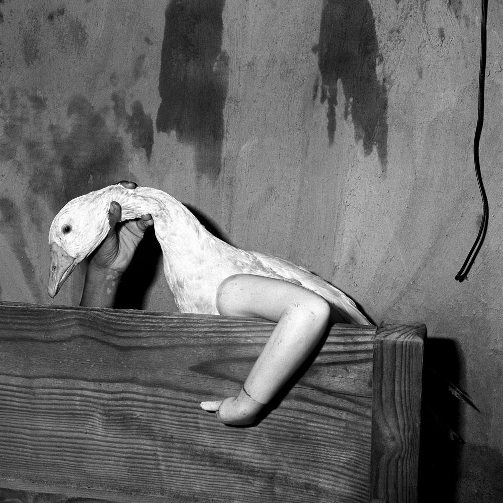 One-Arm-Goose-2004-©-Roger-Ballen-Courtesy-Galerie-Karsten-Greve--1800x1800