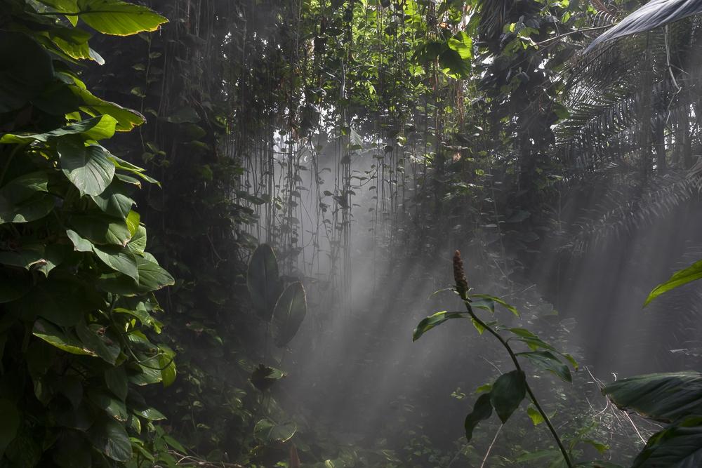 Rain Forest Mist, Biosphere 2