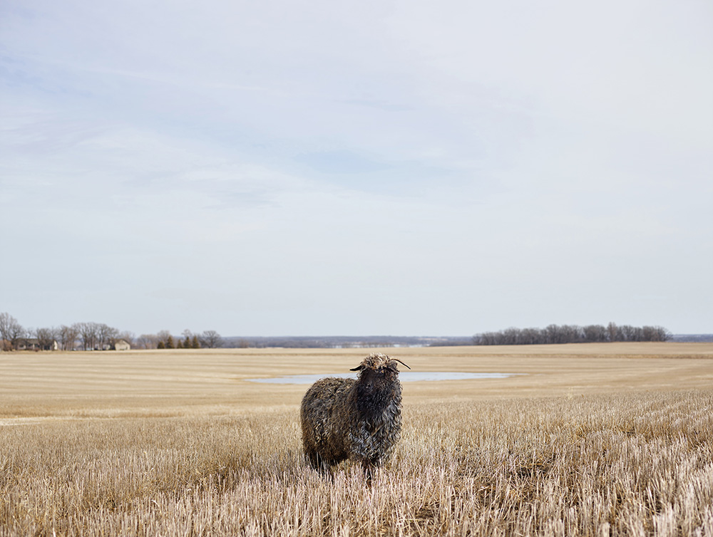 Curly, Otter Tail County, Minnesota, USA