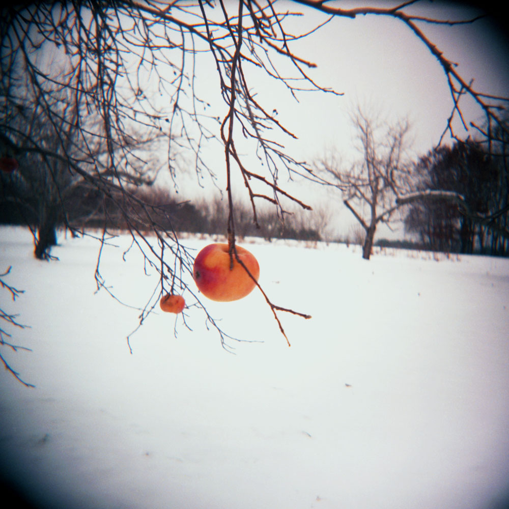 AlineSmithson_Winter Apple
