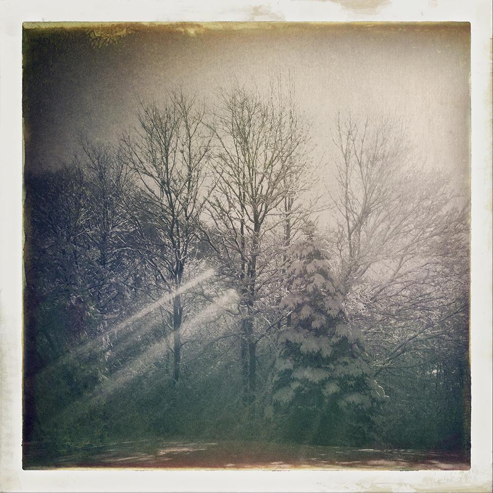 Cerbone-SnowExhibition