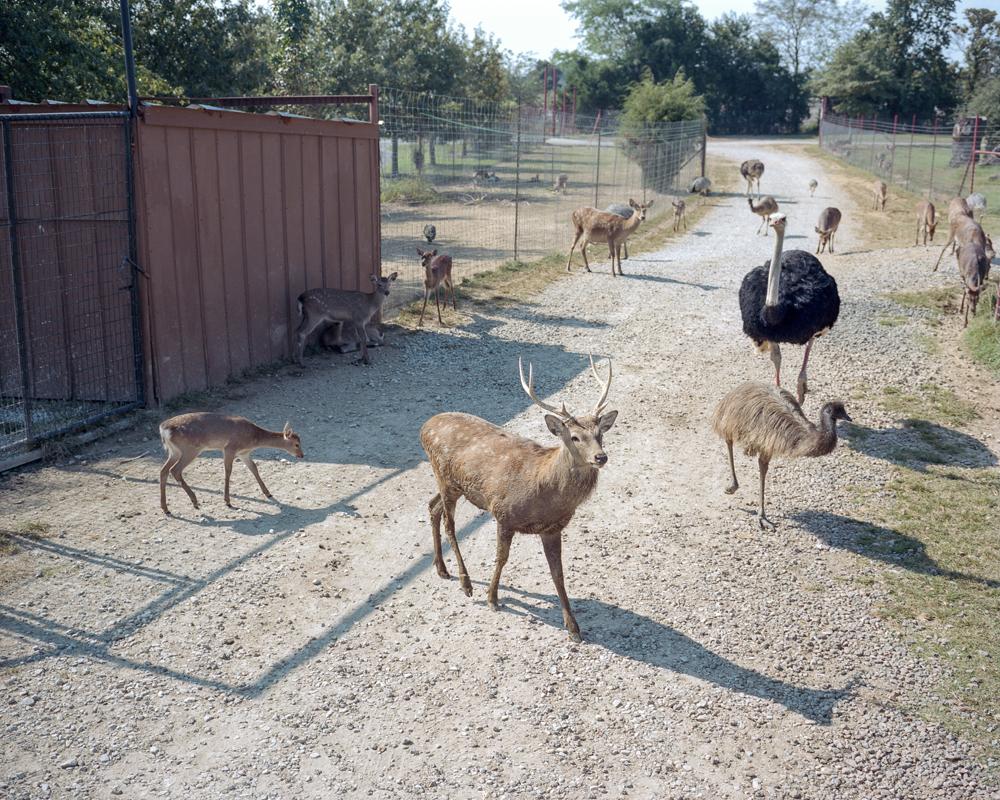 Hardin-Animals