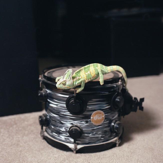 Marvin (Chameleon)