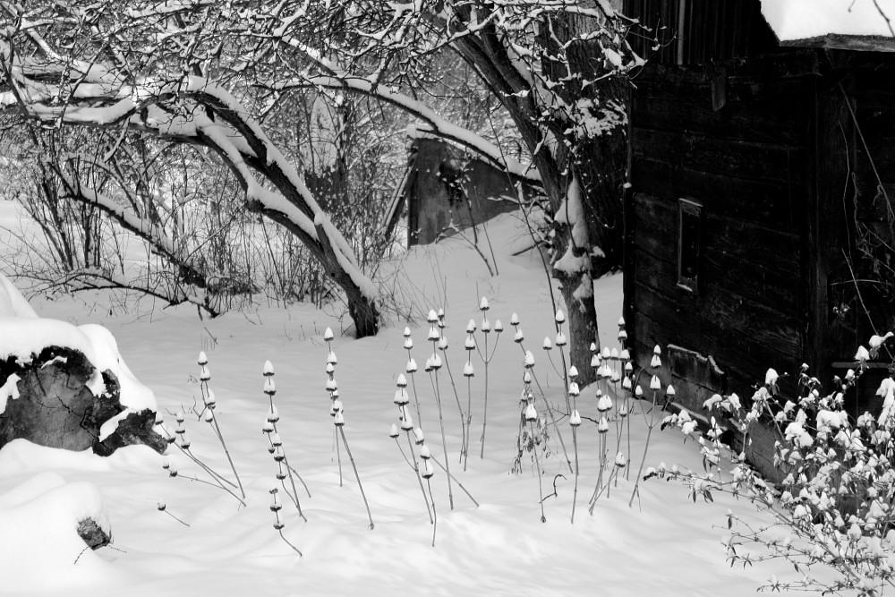 MichalAmerek-SnowGnomes