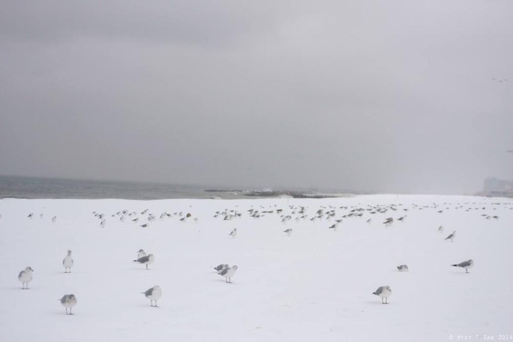 Snow birds_1