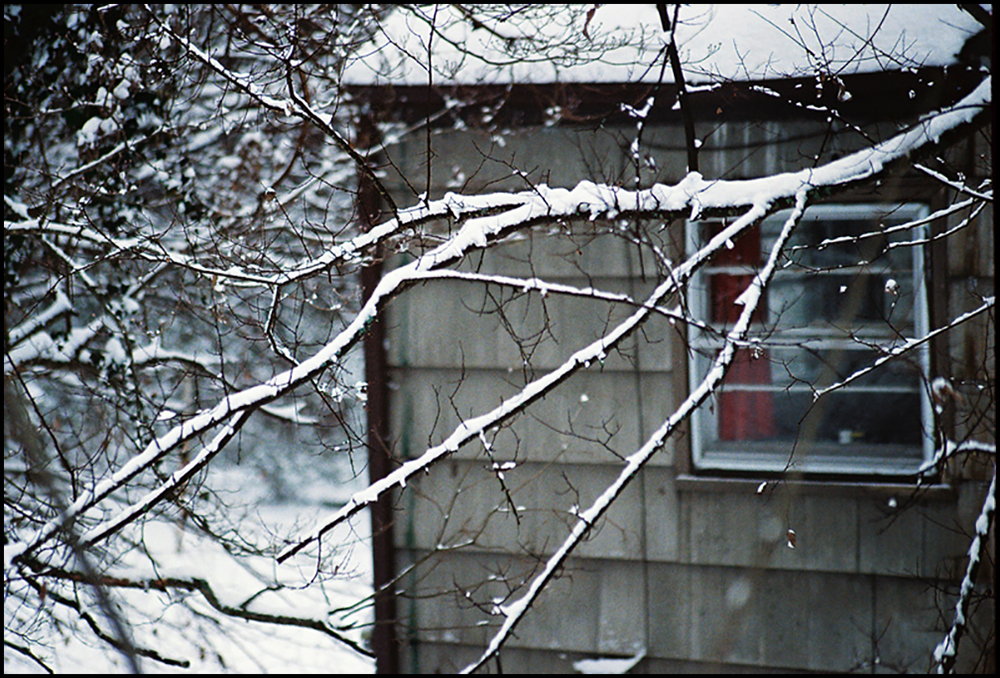 snowbranch