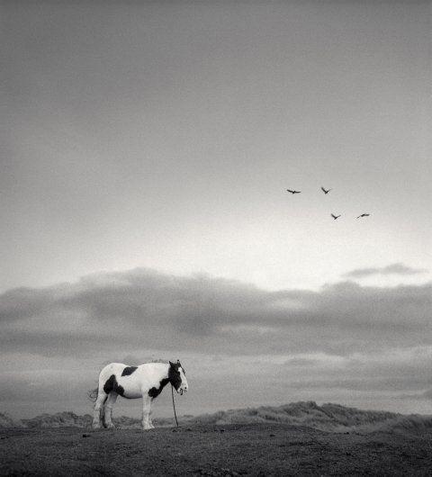 (C)Pentti Sammallahti_Druridge Bay, England, , 1998
