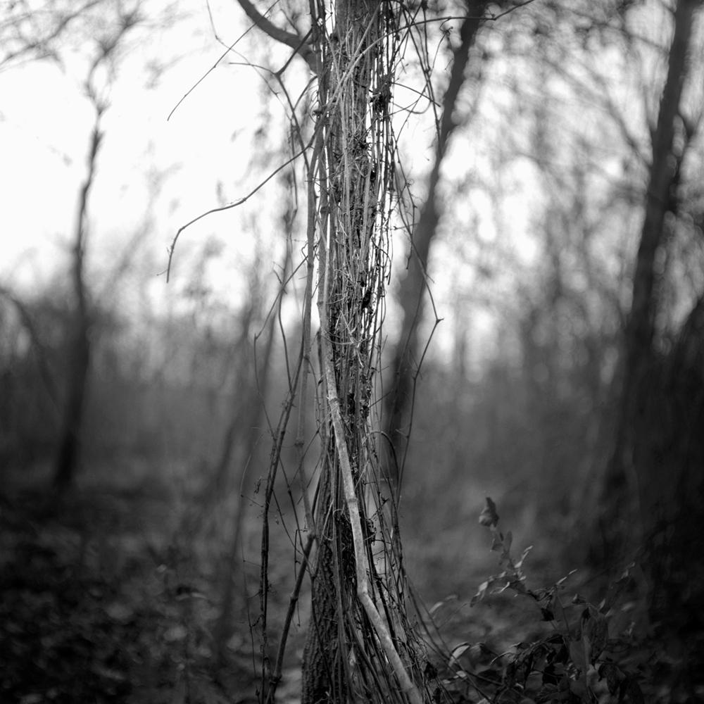 Thibodeaux_Pecan Grove_1000