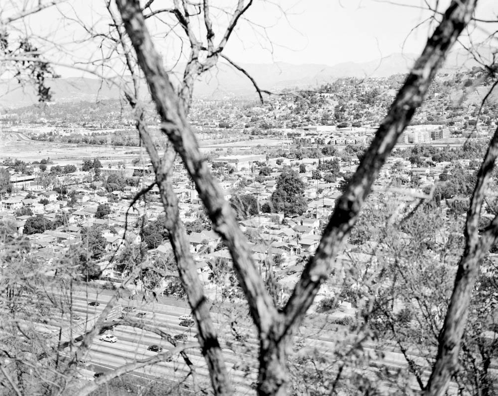 Virginia_Wilcox-Arboreal01
