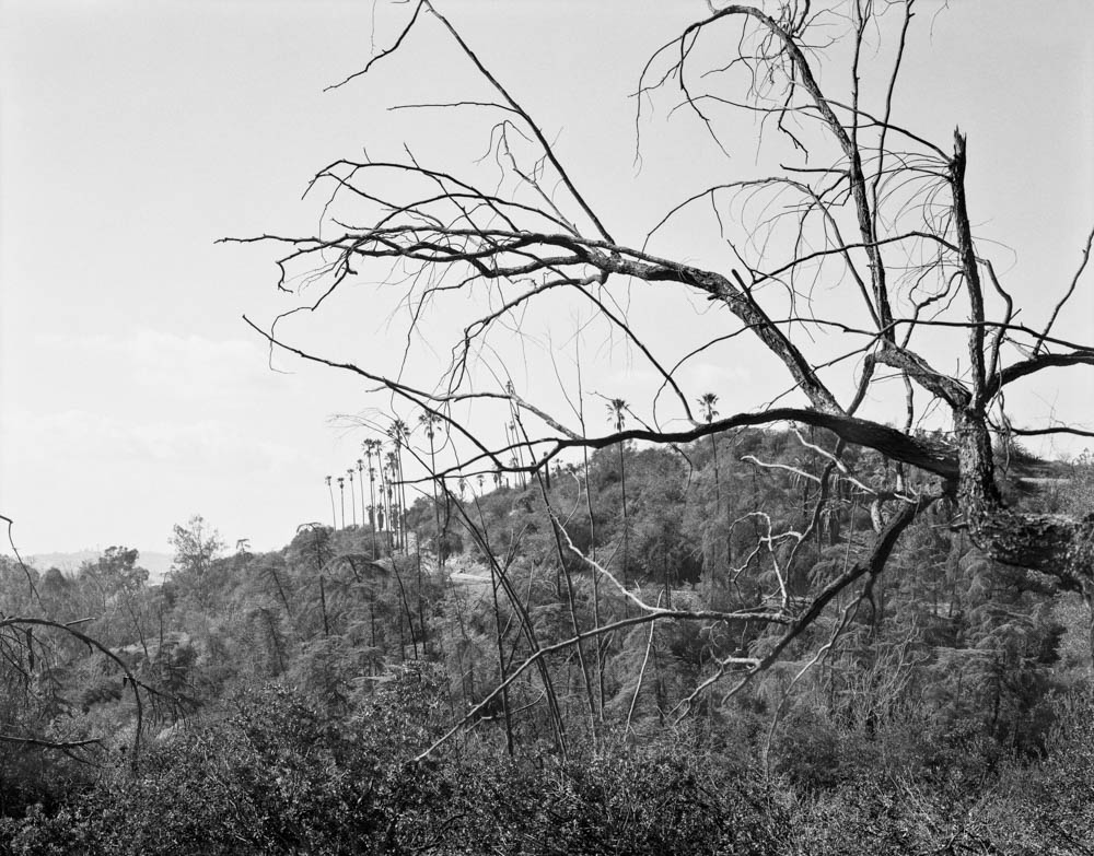 Virginia_Wilcox-Arboreal05