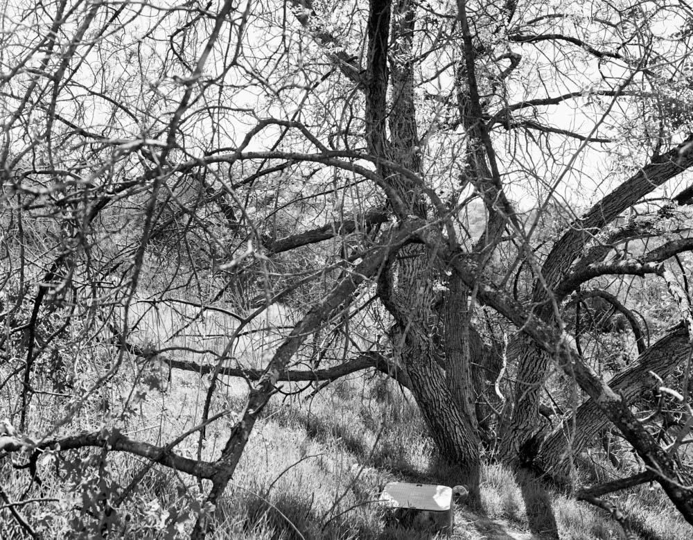 Virginia_Wilcox-Arboreal06