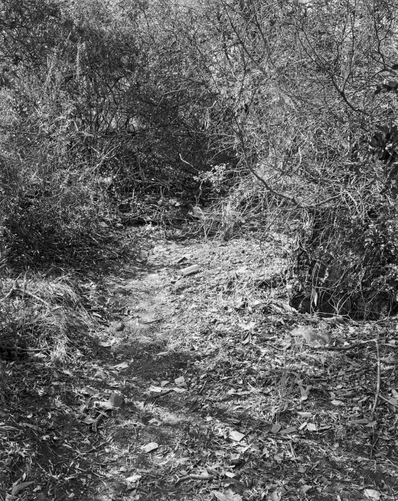 Virginia_Wilcox-Arboreal08