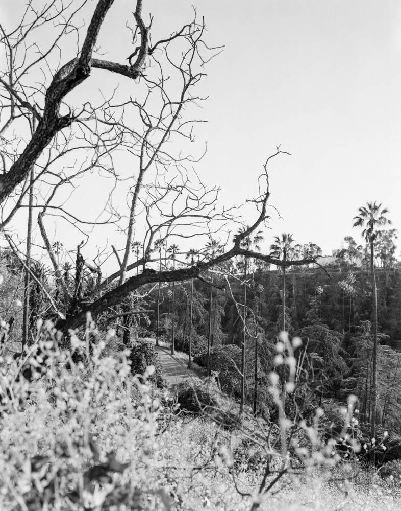 Virginia_Wilcox-Arboreal16