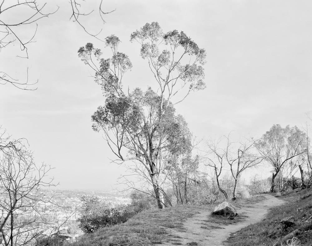 Virginia_Wilcox-Arboreal18