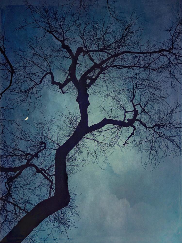 wendi-schneider-crescent-moon