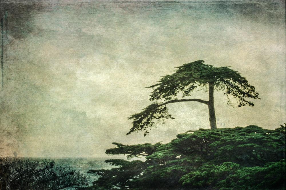 wendi-schneider-cypress