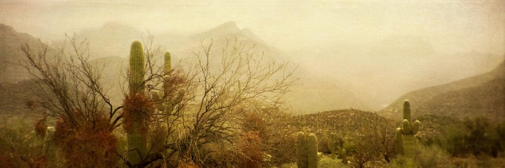 wendi-schneider-desert-mist