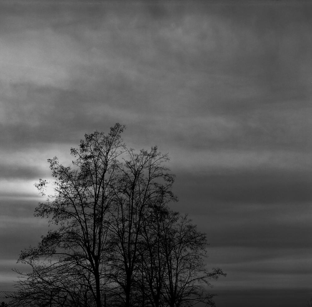 01_Hannah_Kozak_Chelmno Tree