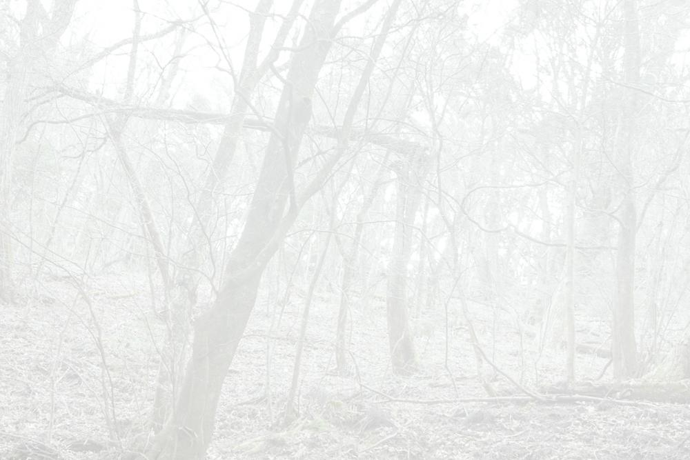 FFantasia_5_YukariChikura_FluoriteFantasia_4_5193