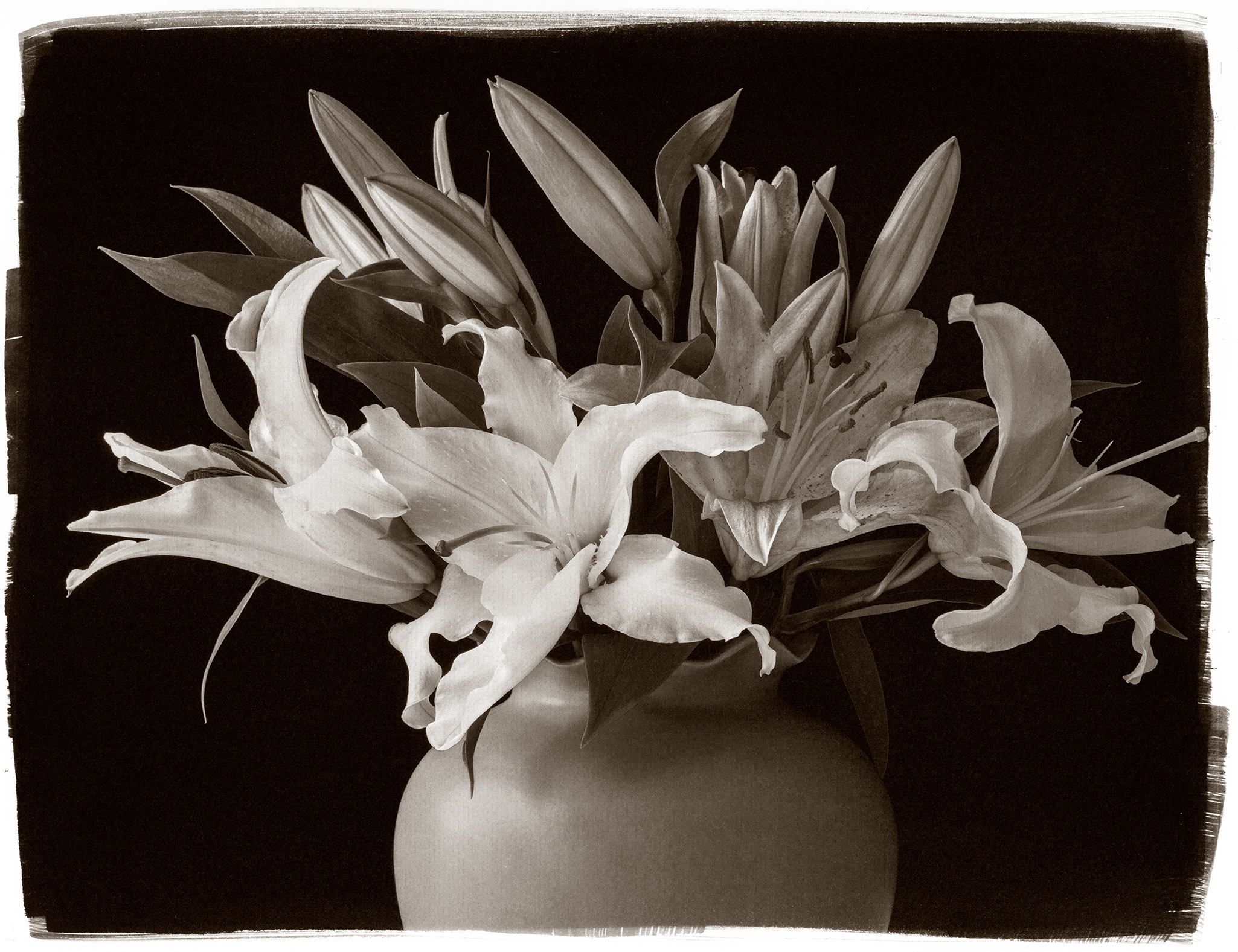 Carnochan, CONSIDER THE LILIES