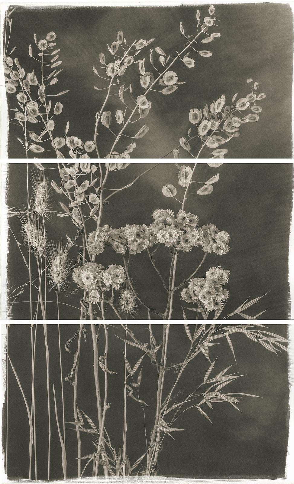 Carnochan, Valley Grasses V