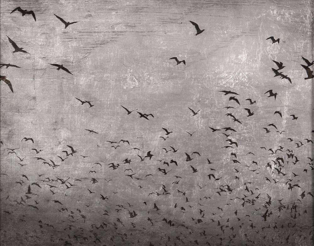 Sky's Escape