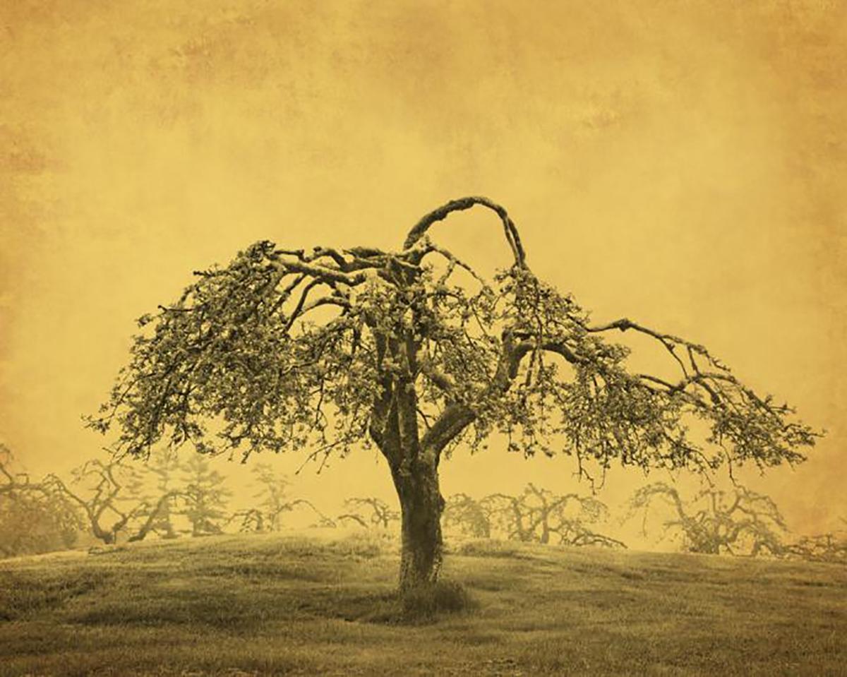 Tenneson, Apple Tree
