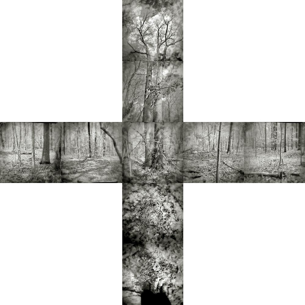 2 Tintype Tree