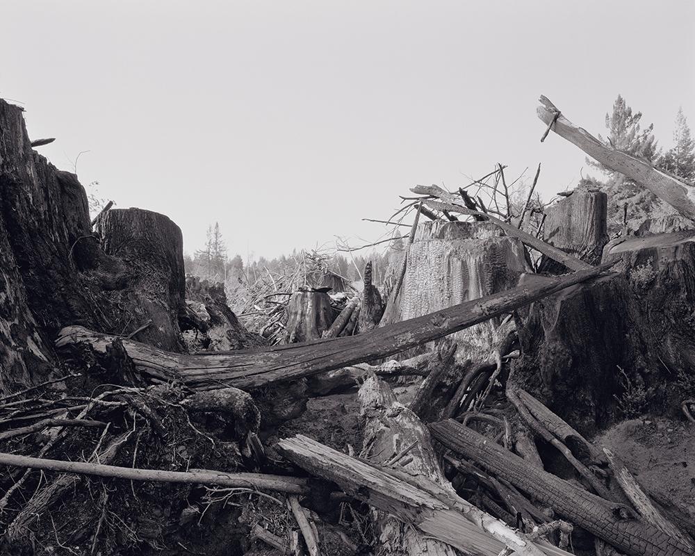 06_RichardRothman_RedwoodSaw_Redwoods-1784-1000w 72dpi5