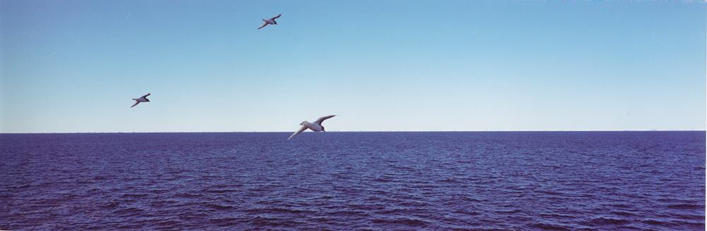 11- Petrels, Amundsen Sea, Antarctica., 2000jpg
