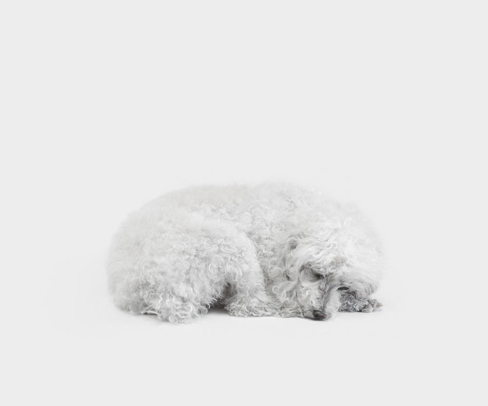 15. Still Life_Muffin, pigment print, 83x100cm, 2014