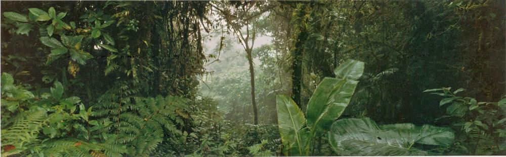 16- Costa Rica, 1989