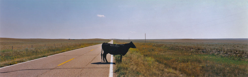 23- Cow, Nebraska, 1994