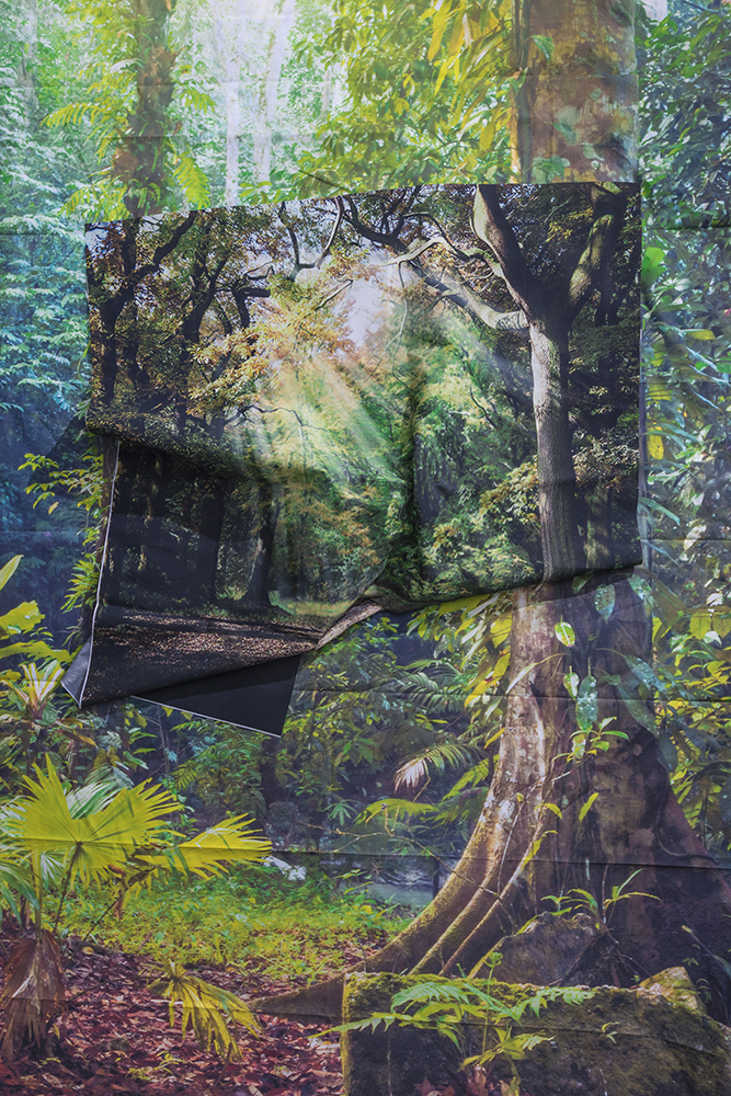 "Kalee Appleton Sunrays in Rainforest Edition of 3 – 28"" x 42"" - $2,300 Edition of 5 - 20"" x 30"" - $1275 Archival Inkjet Print 2017"