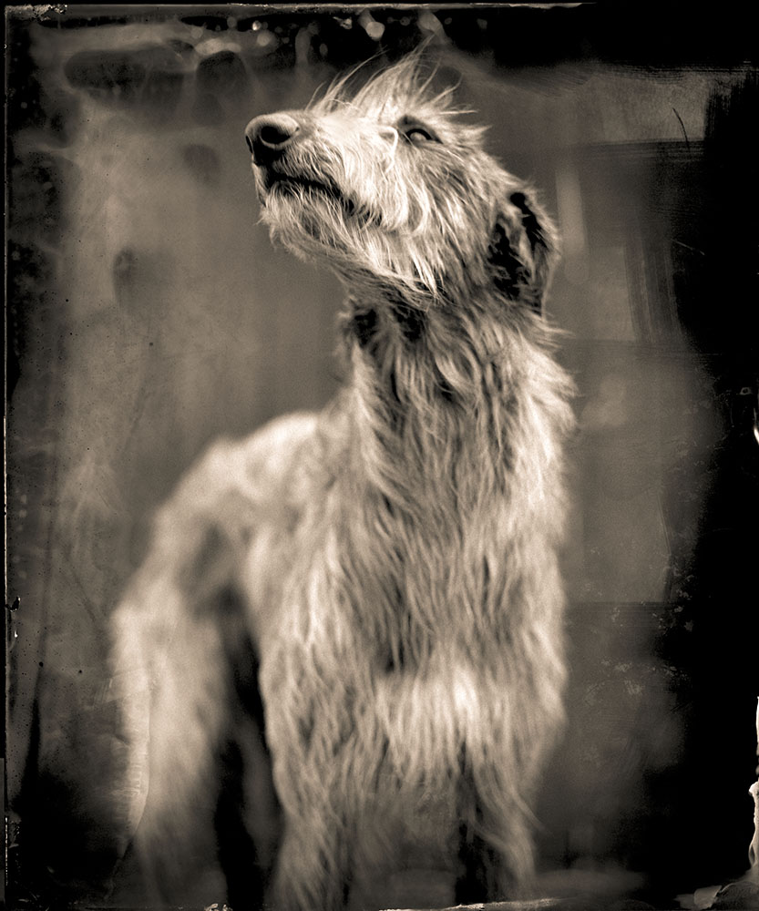 BOG DOG 2014
