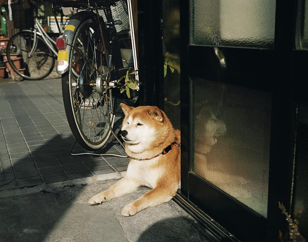 SweetDog-Kanazawa-2011