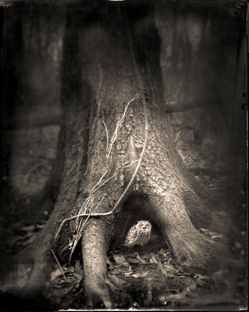 TREE ROOTS 2014